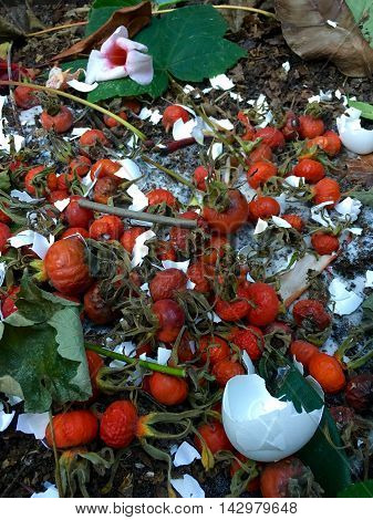 Fresh bio-waste and compost with rose hips in the garden +