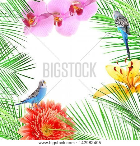 Frame of different flowers, budgies and palm leaves with space for text on white background.