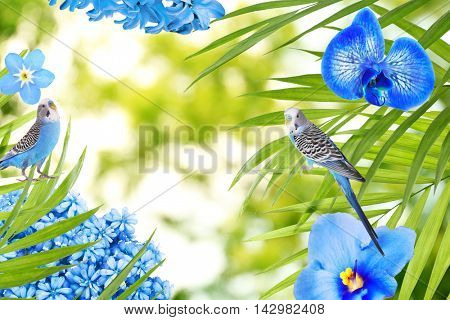 Frame of different flowers, budgies and palm leaves with space for text on blurred background.
