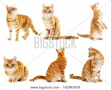 Red cat collection isolated on white