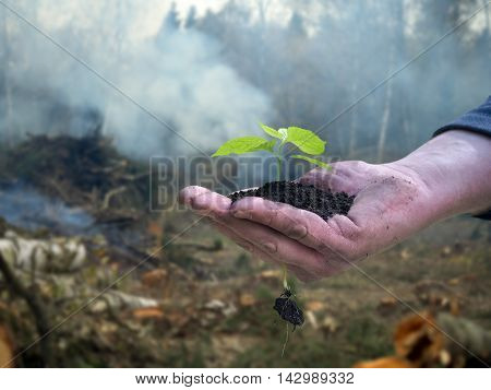 Men working hand holds a young plant. Background - tree felling cutting of trees smoke. The concept of environmental protection forest ecology
