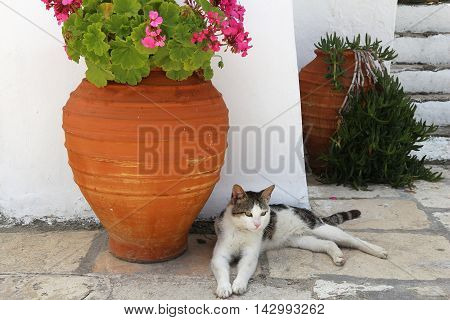 Cat Of Greece