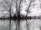 Winter Ducks poster