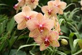 picture of yellow orchid  - Orchids beauty Blooming in the Garden At Spring Time - JPG