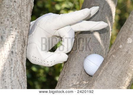 Golfer And Tree