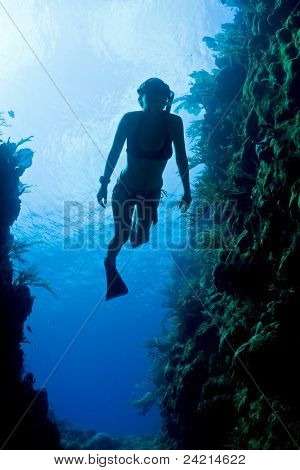 Carribean Freediver