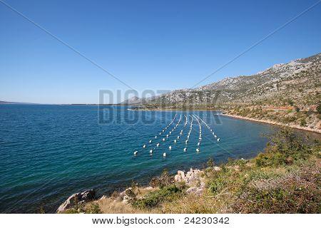 Mussel Farming - Croatia