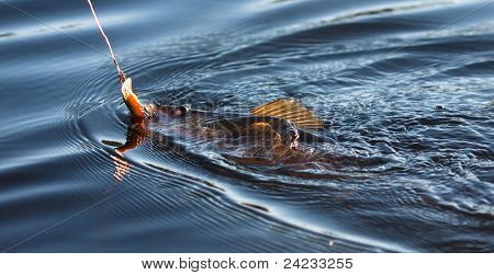 Fishing for Pickerel