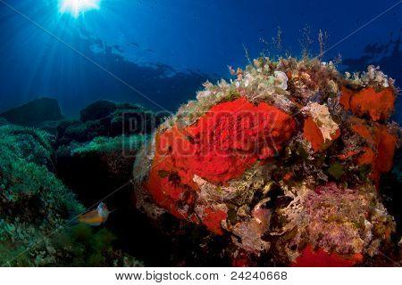 mediterranean sealife