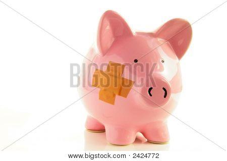 Piggy On White