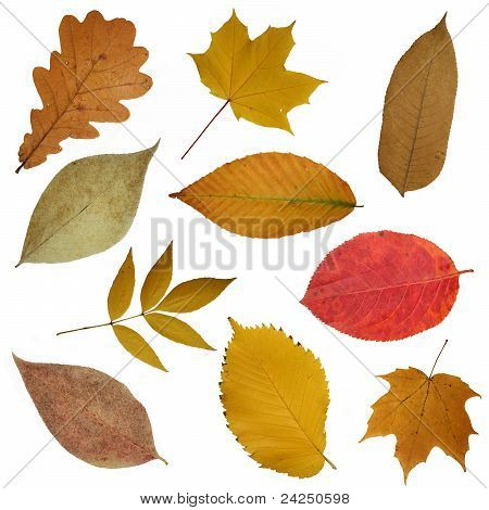 Yellow Beautiful Leaves