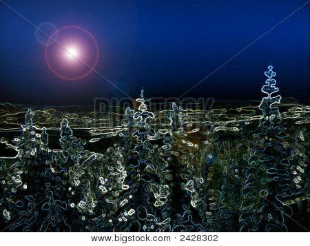 Nightsky Forest