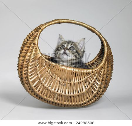 Kitten Looking Up In Small Basket
