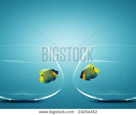 Two Angelfish In Two Bowls