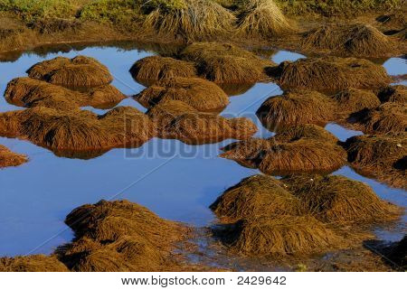 Grass Mounds In Wetlands