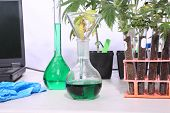 Marijuana Science Lab with Beakers, Marijuana Plants, Chemicals, Computers, Microscopes, Test Tubes, poster