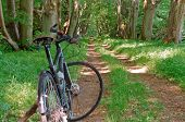 The Bike Next To The Old Tree, Black Bike In The Forest, Black Bike Against The Greenery poster