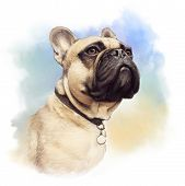 Cute French Bulldog. Realistic Drawing Of Boxer Dog On Watercolor Background. Hand Painted Illustrat poster
