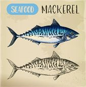 Scombroid Mackerel Sketch Or Pelagic Fish. Signboard With Hand Drawn Seafood Animal. Wildlife For Sp poster