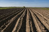 Plowed Agricultural Field. Landscape With Agricultural Land, Recently Plowed And Prepared For The Cr poster