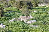 White And Grey Donkey Tied To A Bush In Green Lush Grass Rocky Meadow Surrounded By Bushes poster
