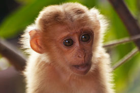 stock photo of cute animal face  - Cute monkey in nature is cute animal - JPG