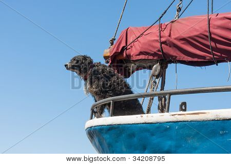 Watchdog Is Protecting The Sailing Ship