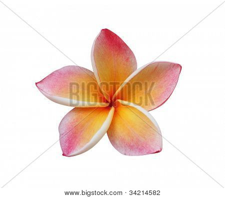 Frangipani (Pumeria) flower isolated on white �¢�?�? clipping path included