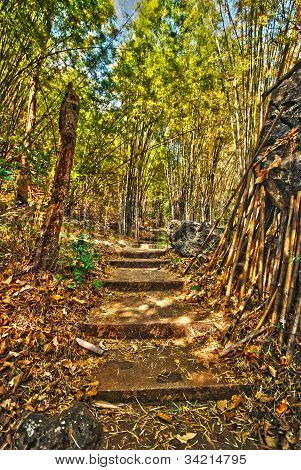 Path Leading Into A Tropical Garden High Dynamic Resolution Photo