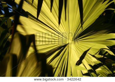 Palm Leaf At Night