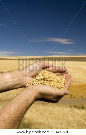 Farmers Gold