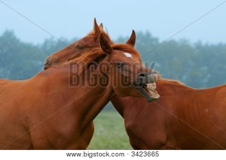 Two Red Horses. One Laughing Horse