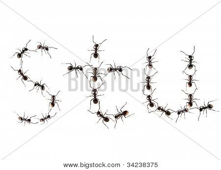 A line of worker ants marching to alphabet letters destination.