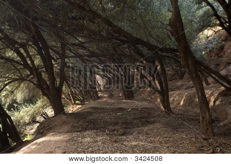 Path With Curve Trees