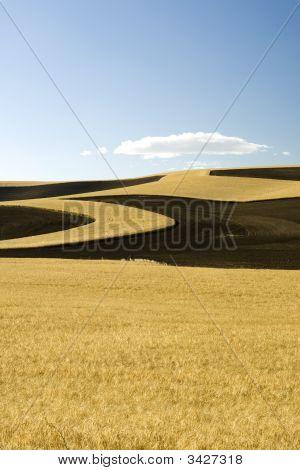 Farming For Erosion Control