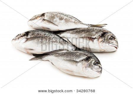 Goldbrasse Fischfutter