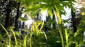 Close Up Of Green Plants With Small Leaves Against Bright Sunlight Shining Through The Trees. Natura poster