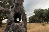 Landscape With A Dry Tree Trunk In The Foreground. Guijo De Granadilla. Spain. poster