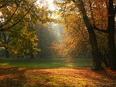 foto of fall trees  - sun rays breaking through the trees in fall time 1019_30 - JPG