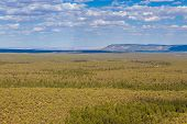 View Of The Colorado Plateau In Arizona. Vast Forest Areas, Mountains In The Background. Usa. poster