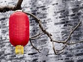 Chinese  Lantern Hanging On Trees.traditional Chinese Lanterns .  Red Paper Lanterns, Chinese New Ye poster