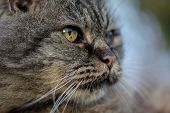 Close-up Of A Cat, Outdoors Feline Portrait poster