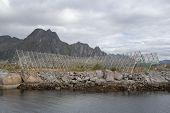 Traditional Fish Drying Racks At Svinoya, Svolvaer, On The Lofoten Islands, Norway poster