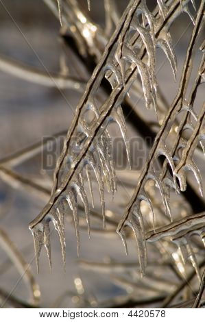 Twigs In Ice