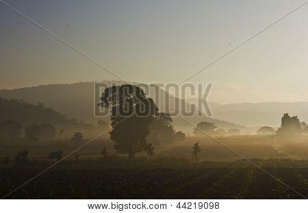 Misty countryside field