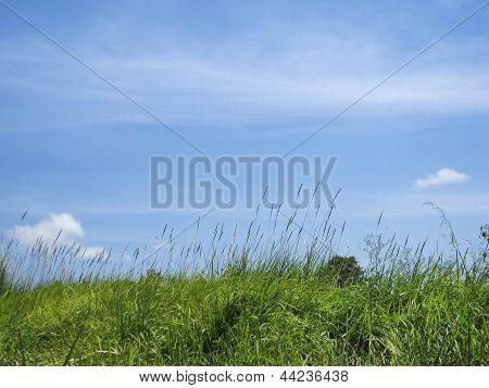 Green Grass Blue Sky Background