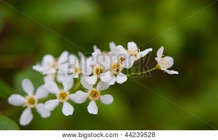 Dismissed Flowers