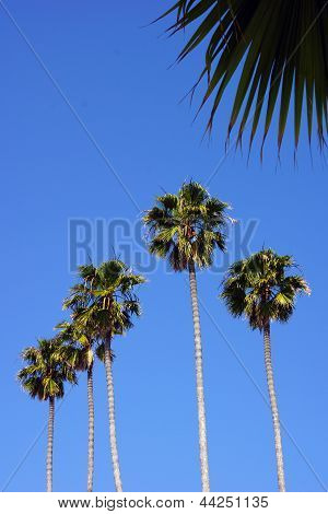 Five palm trees