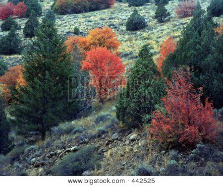 Logan Canyon Hillside