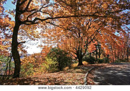 Fall Foliage On Blue Ridge Parkway